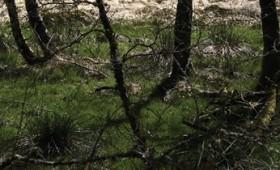 [RIII-I] Dale Lloyd – Taurion, trou de lapin